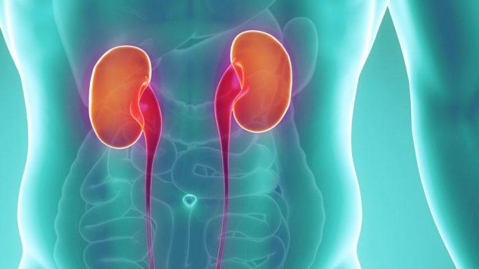 Kidney-853x480